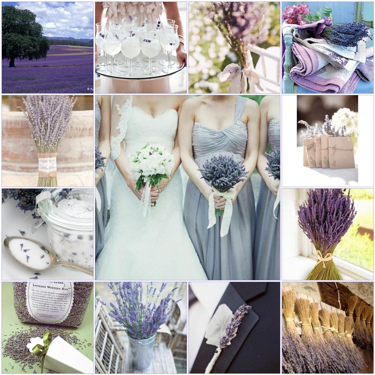 nụ hoa lavender khô