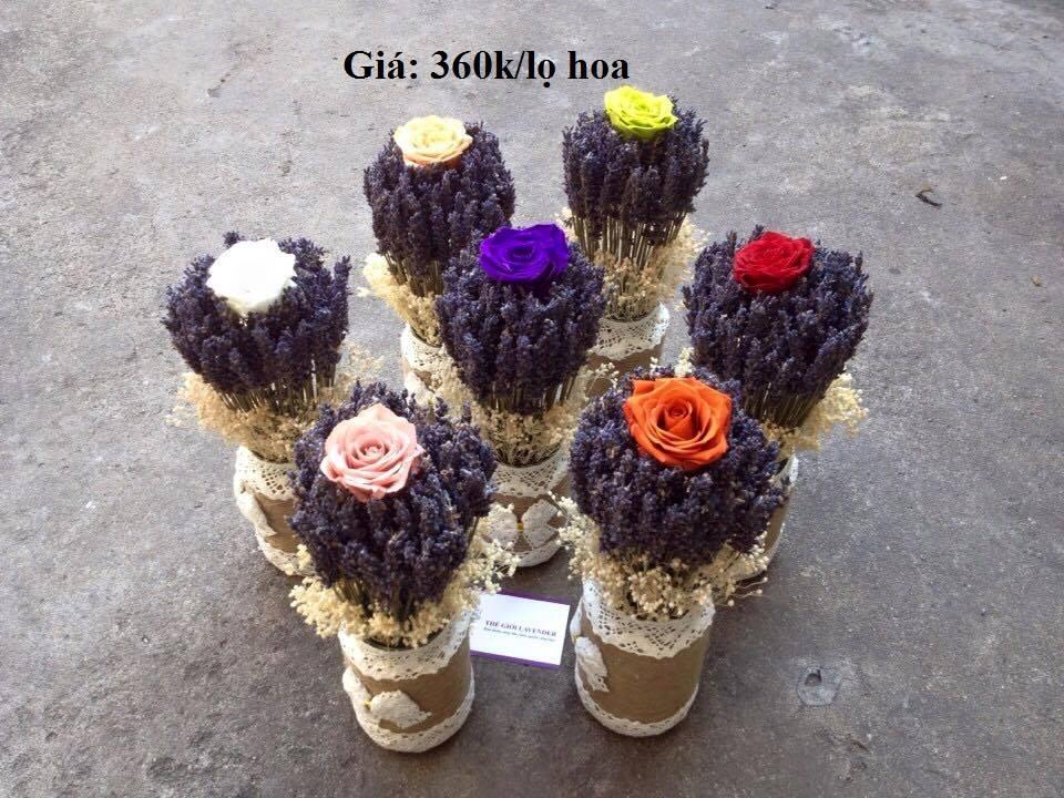 hoa lavender khô