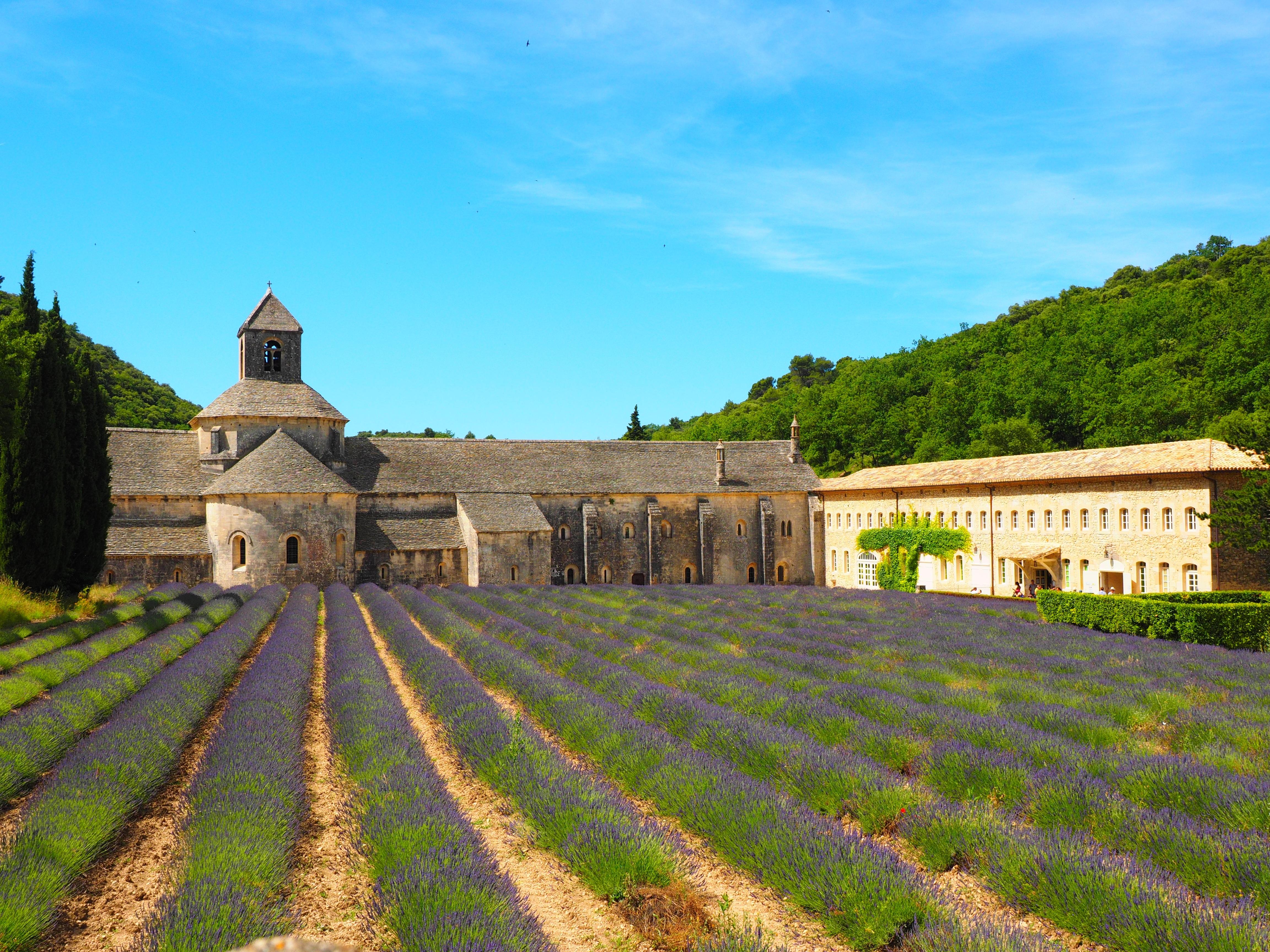 hoa kho lavender